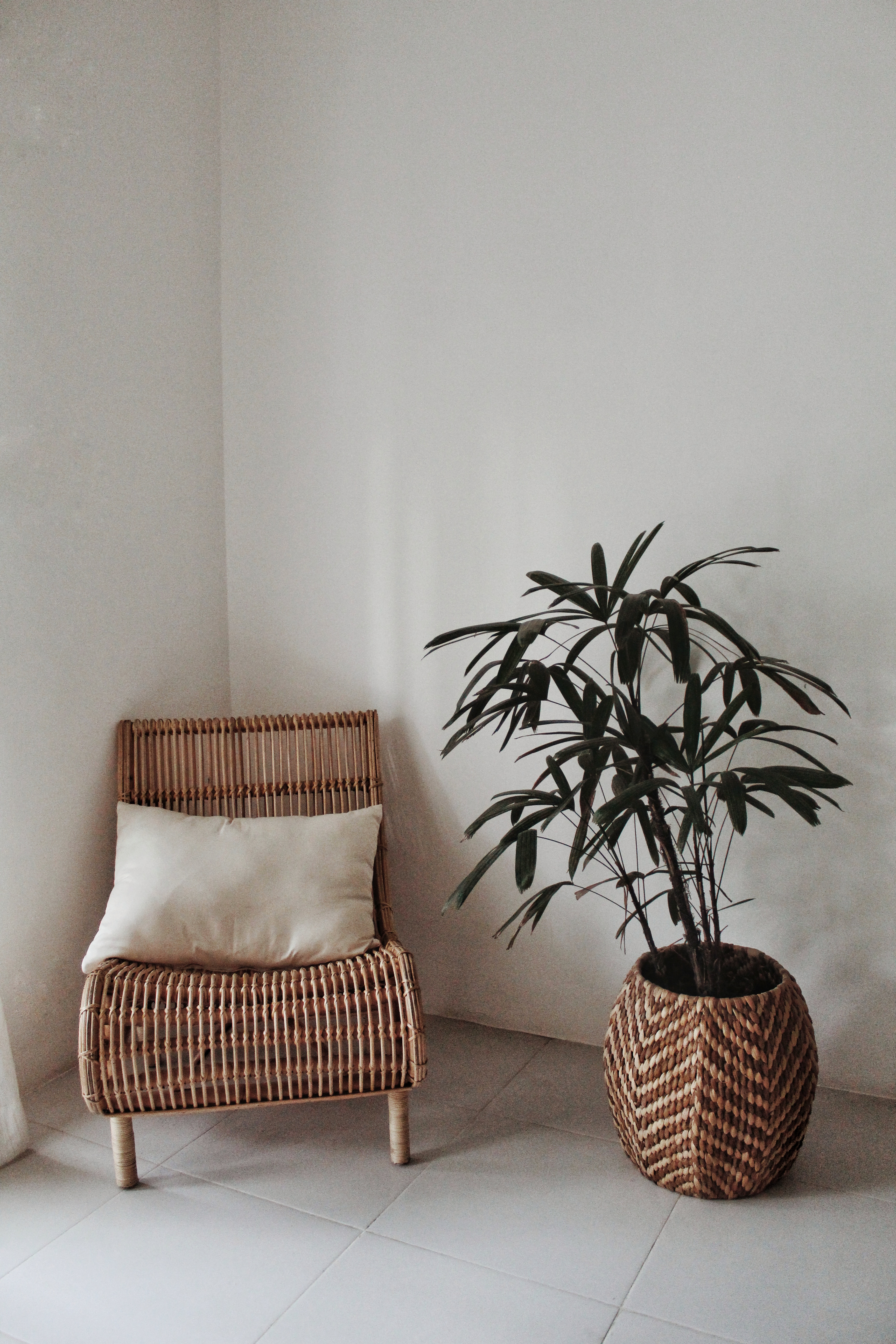 bamboo chair and green plant