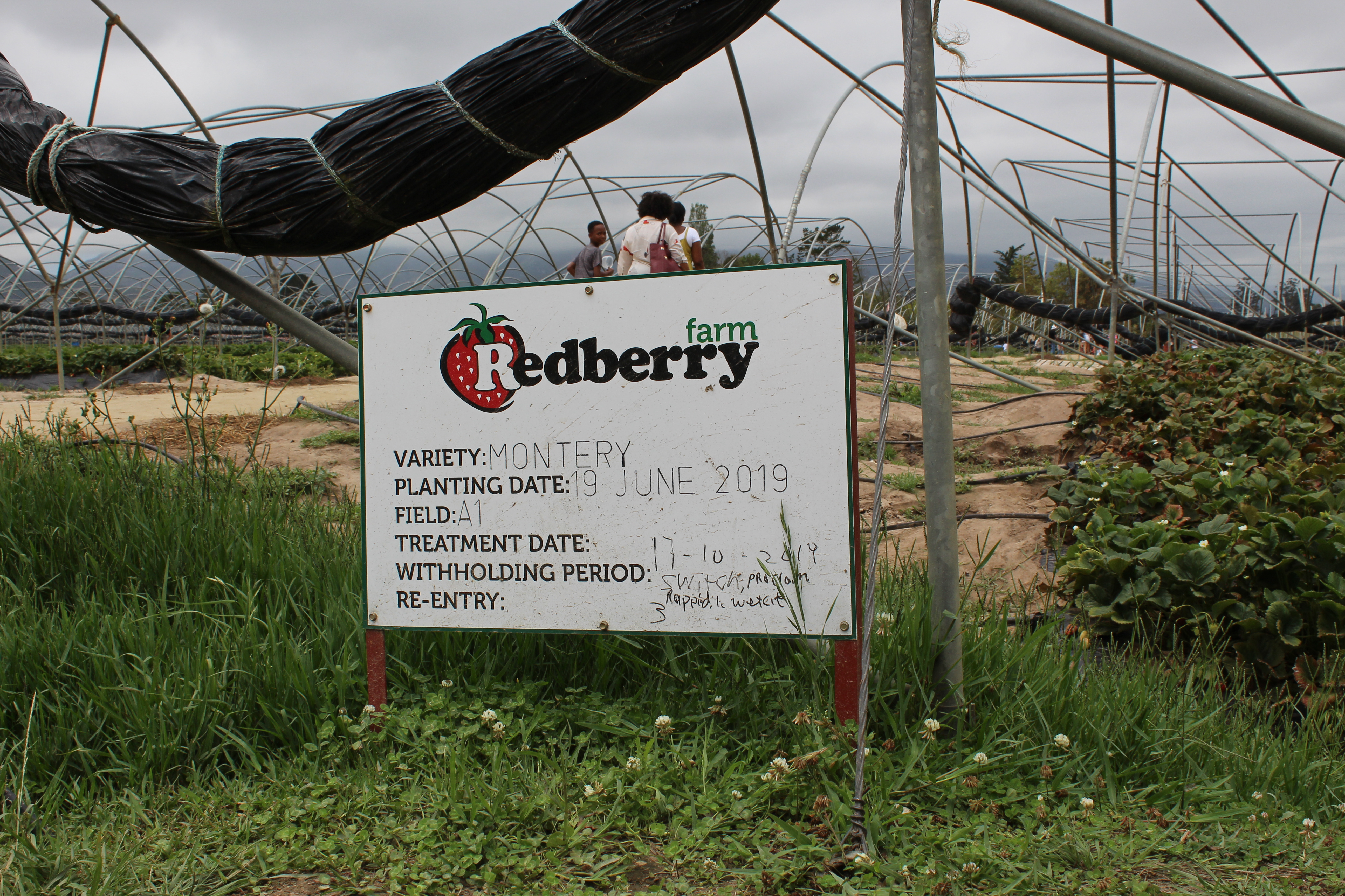 redberry farm in george western cape in south africa